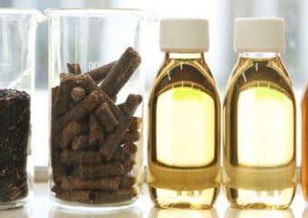 Saipol will focus on vegetable oil production